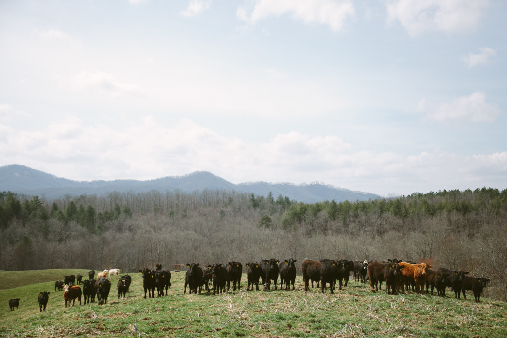 2016-03-10 Brasstown Beef 28