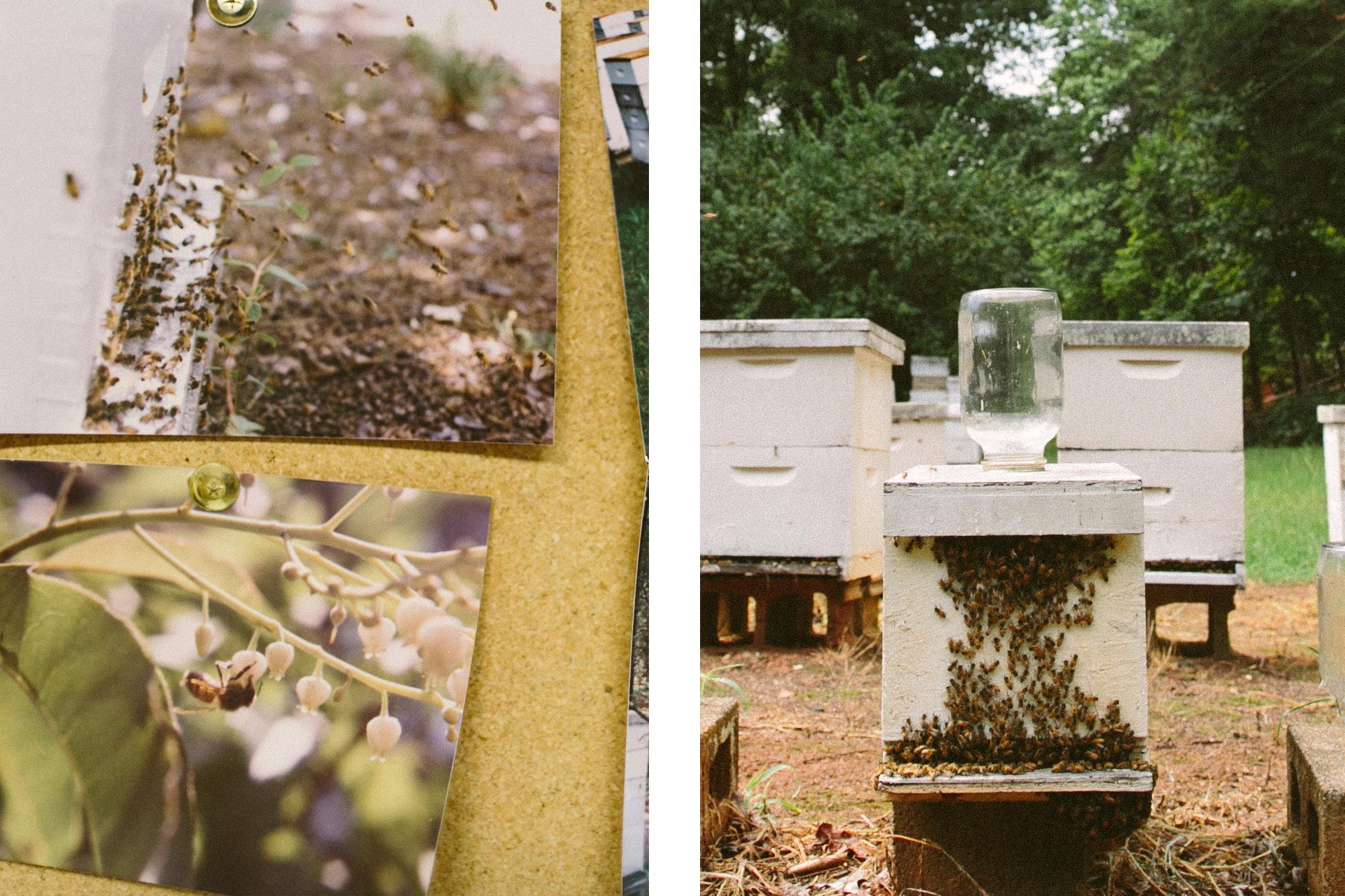 BeeWild_Bees2