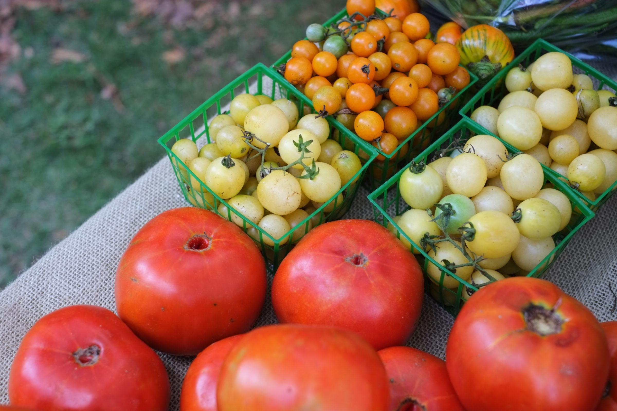 Jody_Tomatoes